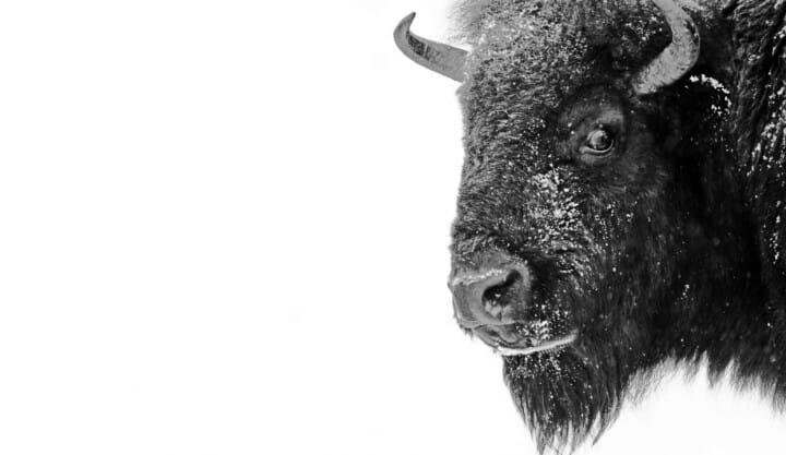 Bison Solicitors, Aldershot